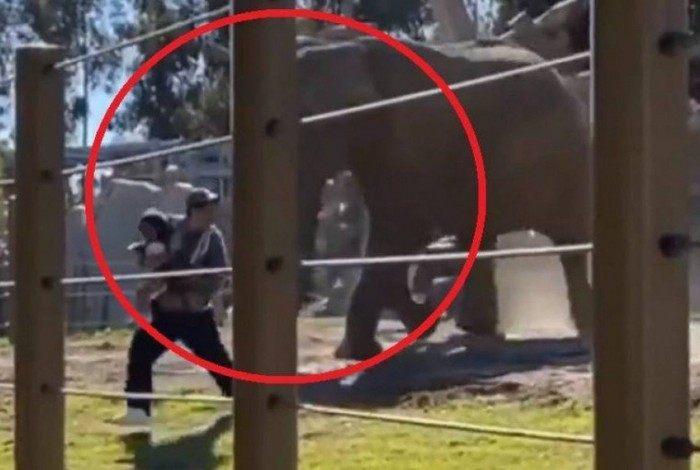 Com a filha de 2 anos no colo, homem invade jaula de elefante em zoológico e é atacado