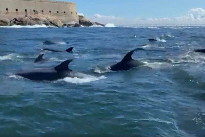 Grupo de golfinhos Nariz-de-Garrafa é visto na Baia de Guanabara