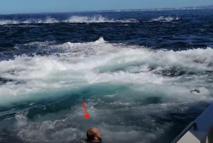 Homem caiu do barco com o impacto da baleia