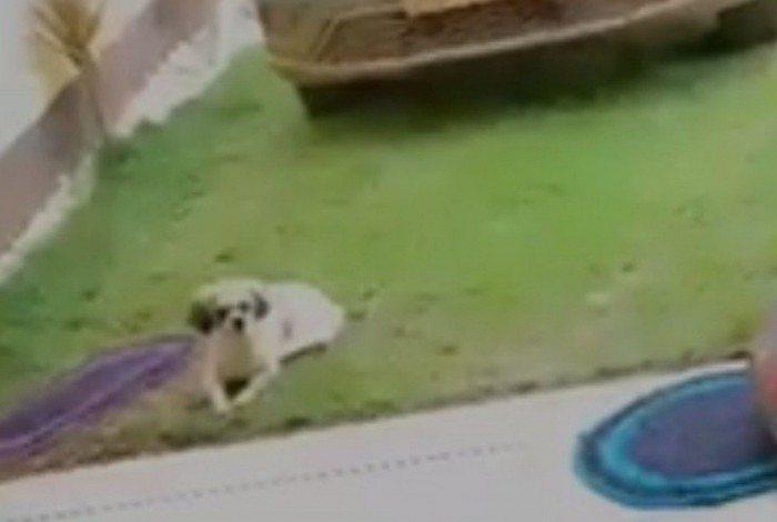 No vídeo que circula nas redes sociais, este pobre cachorrinho assiste ao surubão do Airbnb, que aconteceu na casa de Verônica