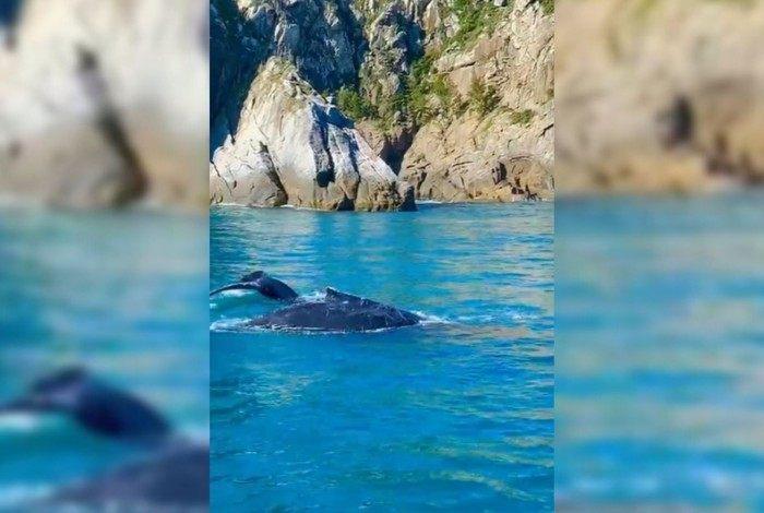 Especialistas afirmam que a passagem de baleias pela costa da cidade é comum nesta época do ano