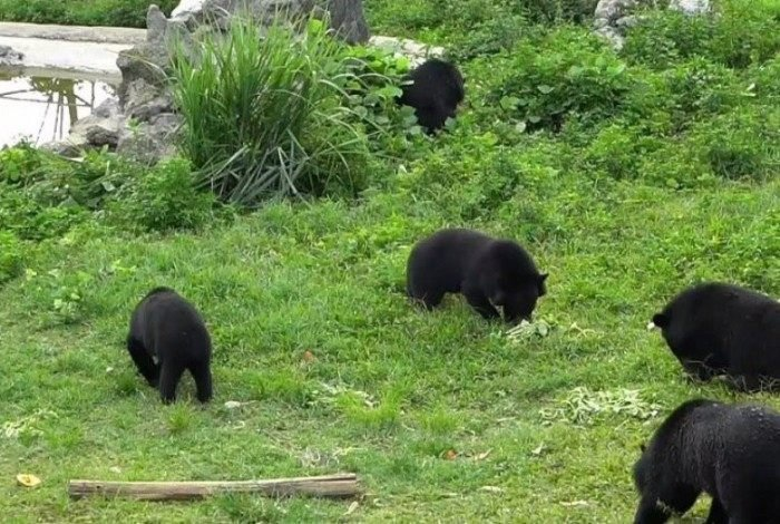 Xuan e Mo foram encaminhados para o santuário de ursos de Ninh Binh