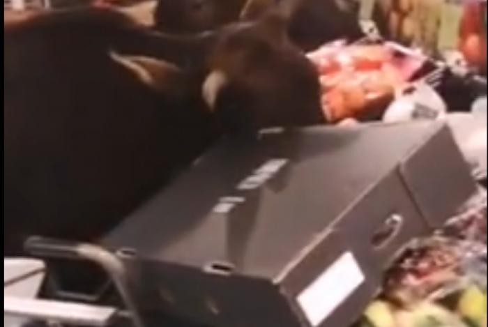 Vacas invadem supermercado na China