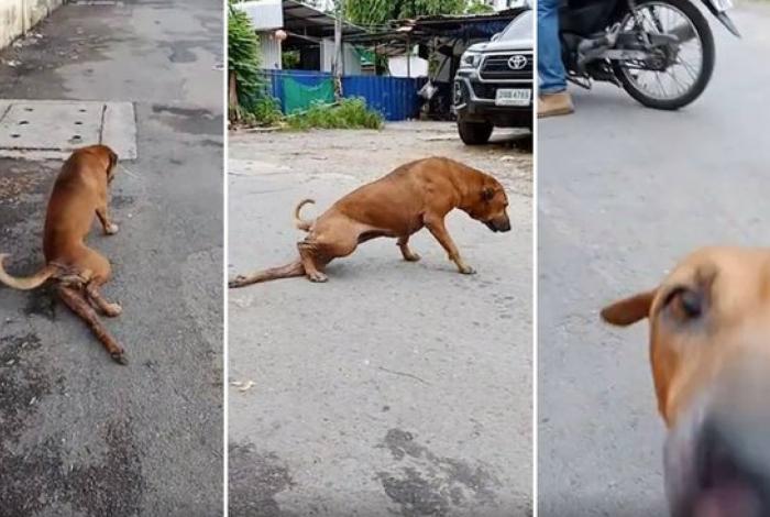 Cachorro finge ter a pata quebrada e vídeo viraliza na internet